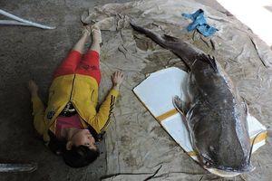 Người dân ở Đắk Lắk câu được cá lăng 'khủng' nặng gần 1 tạ trên sông Sêrêpốk