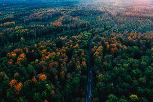 Những khu rừng cổ tích còn tồn tại trên thế giới
