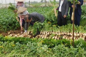 Lavifood bắt tay ILMI xây nhà máy chế biến rau quả