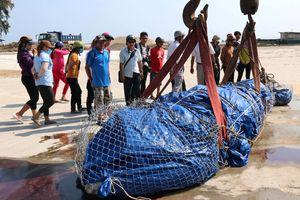 Đưa cá voi nặng 3 tấn, dài 6 m vào bờ chôn cất