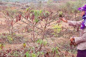 Gia Lai: Mỏ đá gây ô nhiễm, dân 'bao vây' máy móc