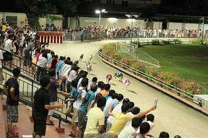 Đà Nẵng: Dành 580.000m2 quỹ đất làm trường đua chó, đua ngựa ở Cẩm Lệ