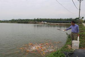 Hải Phòng hướng tới nuôi thủy sản kỹ thuật cao