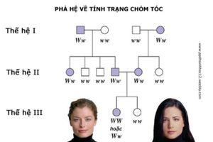 Phương pháp giải bài tập xác suất Di truyền học người