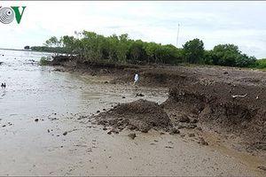 Dự án đê biển Vũng Tàu – Gò Công: Lo phá vỡ hệ sinh thái tự nhiên