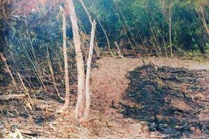 Sơn Động - Bắc Giang: Thiệt hại nặng vì cháy đồi keo, ròng rã đợi bồi thường