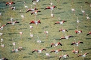 Khám phá thiên nhiên Abu Dhabi