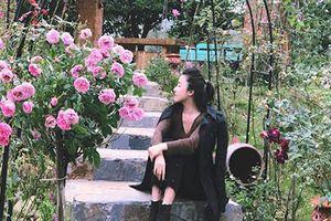 Cả đồi hoa hồng rực rỡ trong nhà vườn rộng 3.000 m2