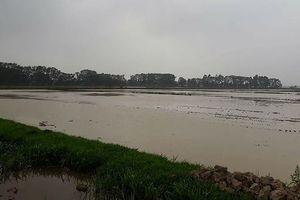 Xã Thanh Thùy (huyện Thanh Oai, Hà Nội): Người dân yêu cầu làm rõ nguồn gốc đất khi thu hồi