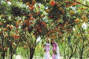 Cần Thơ quy hoạch vùng chuyên canh cây ăn trái chất lượng cao