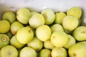 Dưa lê đầu mùa 'made in Ninh Thuận' hút người tiêu dùng thủ đô