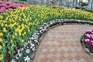 Lễ hội hoa Tulip lớn nhất Việt Nam tại Vinpearl Nha Trang