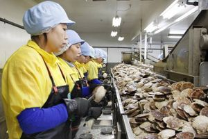 Tu nghiệp sinh nước ngoài tại Nhật sẽ được phép làm việc thêm 5 năm