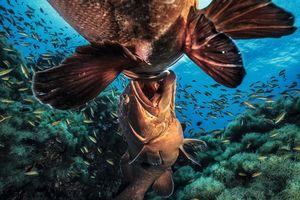 Vẻ đẹp lung linh kỳ thú của các loài sinh vật dưới nước