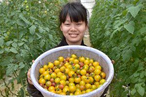 Nhà giàu đổ xô lên Măng Đen trồng rau sạch, thuốc quý
