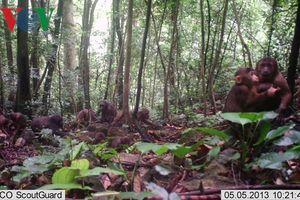 Phát hiện nhiều loài động vật quý hiếm trong sách đỏ ở Khe Nước Trong
