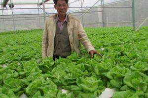 Đà Nẵng cho vay tới 10 tỷ đồng/dự án nông nghiệp công nghệ cao