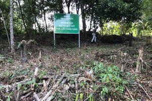Ngừng cấp sổ đỏ đất có nguồn gốc là đất rừng phòng hộ
