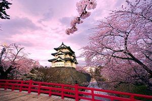 Kinh nghiệm du lịch Nhật Bản tự túc để có chuyến đi trên cả tuyệt vời