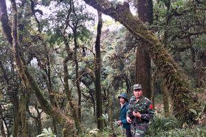 Phát hiện rừng chè cổ thụ hàng trăm năm tuổi tại biên giới Lai Châu