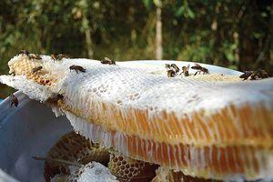 Mật ngọt ở rừng tràm U Minh Hạ