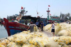 Khắc phục 'thẻ vàng' IUU: Đà Nẵng tăng cường truy xuất nguồn gốc hải sản