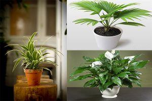 10 loại cây hút khí độc, tiêu diệt nấm mốc cực tốt nhất định nên trồng trong nhà mùa này