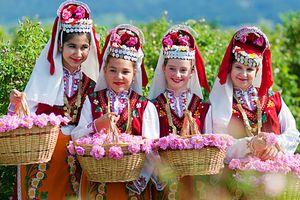 1.000 cây hồng Bulgaria sẽ có mặt tại Lễ hội Hoa hồng 2018