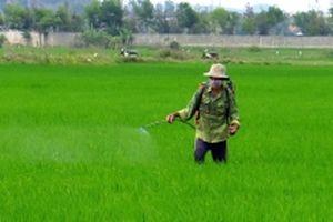 Chủ động phòng trừ sâu bệnh hại lúa vụ đông xuân