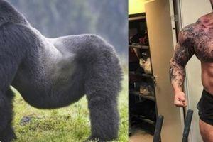 Người khỏe nhất thế giới có đánh thắng được gorilla?