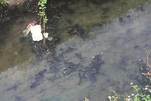 Chất thải chưa qua xử lý bốc mùi hôi thối tại KCN Tam Phước