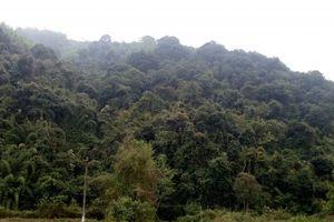 Đề xuất ban hành Nghị định mới quy định về Kiểm lâm và Lực lượng chuyên trách bảo vệ rừng