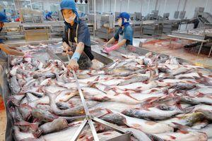 Lo ngại xuất khẩu cá tra kém chất lượng qua tiểu ngạch