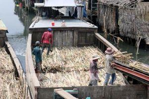Đắk Lắk liên kết với nông dân sản xuất mía đường