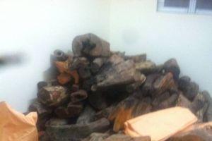 Quảng Nam: Bắt vụ vận chuyển gần 2 tấn gỗ trắc nhập lậu