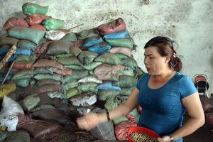 Vụ án cà phê nhuộm pin tại Đắk Nông: Bà chủ khai không dùng để bán hay làm cà phê bột