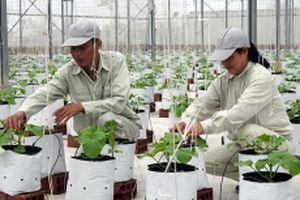 Bắc Ninh phát triển nông nghiệp chất lượng cao