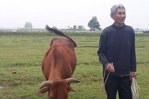 Thanh Hóa: Tại sao chưa xử lý HTX ép dân chăn trâu, bò đóng phí... cỏ?