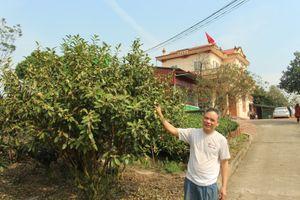 TP.Thái Nguyên: Người dân trồng chè thu nhập tiền tỷ mỗi năm