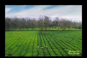 Chư Pah (Gia Lai): Thiên đường xanh của Gia Lai