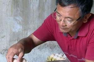 'Vua' gà đất Nam Định sở hữu 20.000 con gà, lãi 50 triệu đồng/tháng