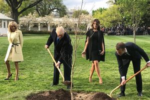 Cây sồi 'gắn bó' Trump trồng cùng Macron biến mất khó hiểu