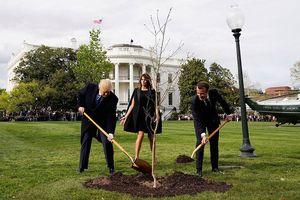 Hành tung bí ẩn của cây sồi ông Trump – Macron trồng ở Nhà Trắng