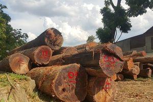 Vườn Quốc gia Yok Đôn không có hoạt động phá rừng