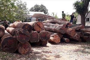 Vụ gỗ lậu sát Đồn biên phòng Đắk Lắk: Đình chỉ công tác đồn trưởng, đồn phó