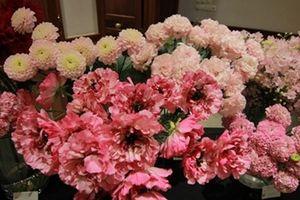 Chiêm ngưỡng 50 loài hoa đẹp nhất của Nhật Bản đến Hà Nội