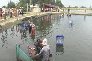 Thăm làng ốc hương ở Hà Tĩnh thu tiền tỷ mỗi năm