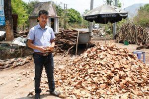 Khởi nghiệp với dược liệu rừng