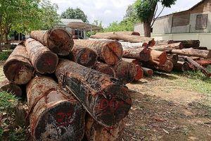 Vụ bắt gỗ lậu tại Đắk Nông: Tạm đình chỉ 4 lãnh đạo đồn biên phòng