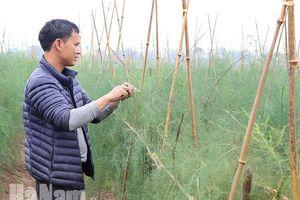 Cây trồng mới giúp nâng cao hiệu quả sản xuất nông nghiệp